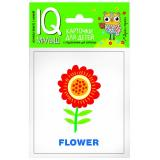 IQУмныйМалыш English. Растения. Набор карточек для детей с подсказками для взрослых (15 карточек с цветными картинками, инструкция), (Айрис-пресс, 2017), К, c.16